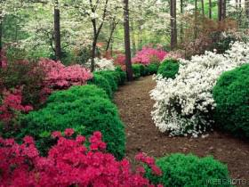 Trail in flower garden
